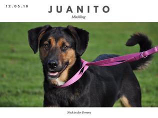 Juanito.png