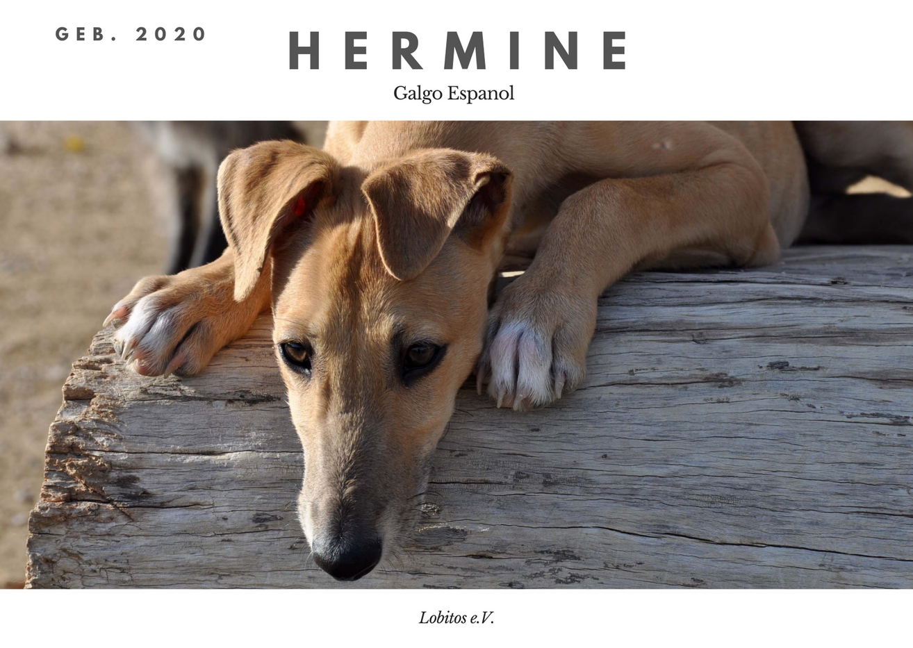 hermine.png