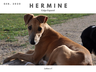 hermine 2.png