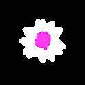 Png4 Pink 1.png