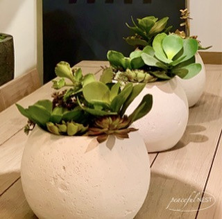 Staging with succulents