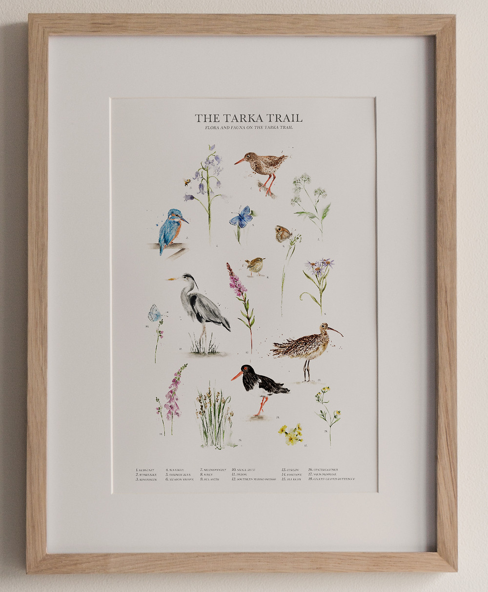 Framed art print of wildlife from the Tarka Trail