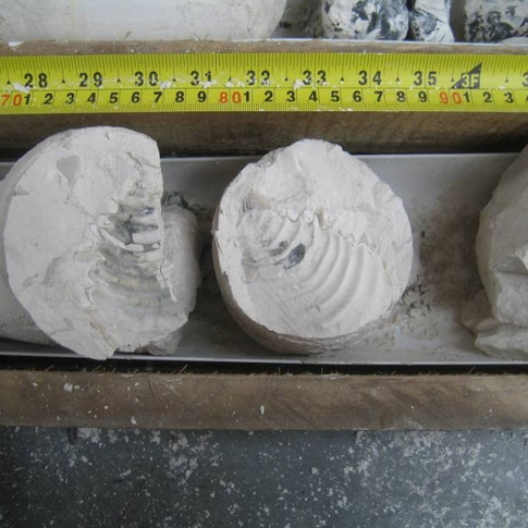 Example of chalk fossil marker bed in core beneath London