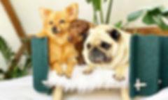 Modern dog bed, Modern pet furniture, Cool dog bed,Gift for dog lovers, Puppy bed,Designer pet bed