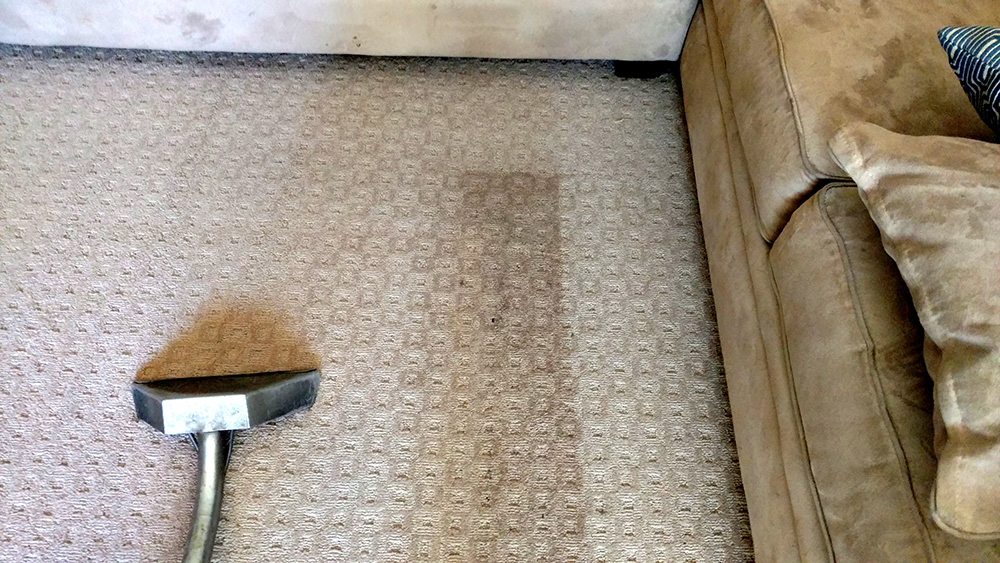 Contrast of Dirty and Clean Carpets