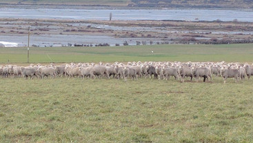 What are the main causes of lamb mortality within 5 days of birth?