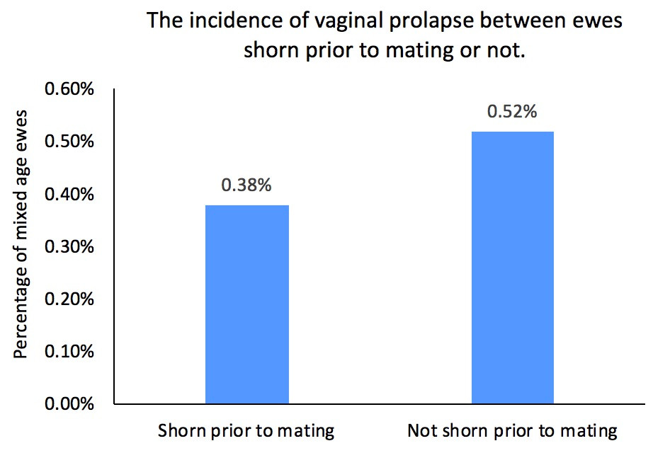Graph 3. Average annual incidence of vaginal prolapse per 100 mixed-age ewes.