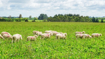 Do lambs grazing diverse pastures have low urinary N excretion as well as fast growth rates?