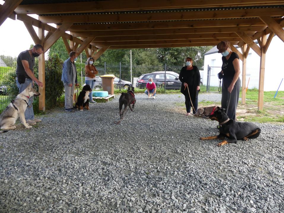 Cours de groupe educateur canin Loire-at