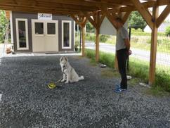 Educateur canin Loire atlantique.JPG