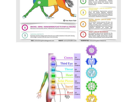 How horses kinesiology parallels with humans