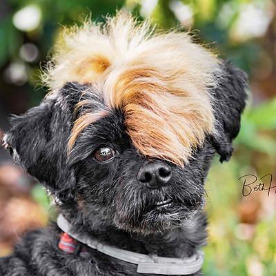 Flynn Pups