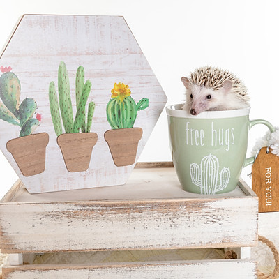 Bunnies and Hedgehogs
