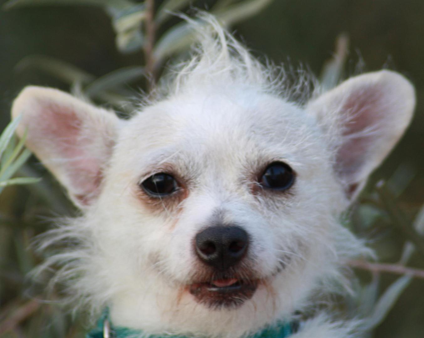 Rescue dog DiamondsntheRuff.jpg