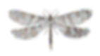 dragonfly-1525836_640_edited.png