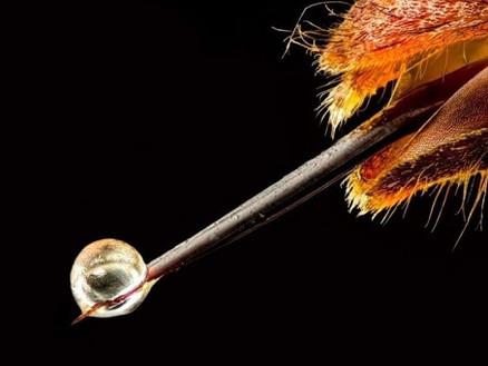 Продукты пчеловодства - пчелиный яд