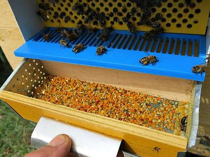 Продукты пчеловодства - пыльца