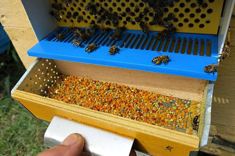 сбор пыльцы пыльцесборником