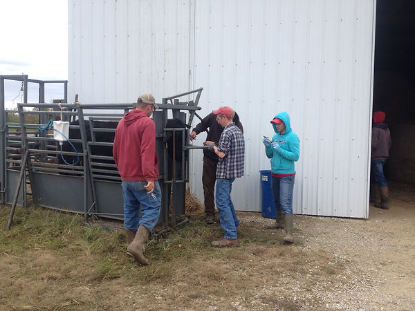 Working cattle is a whole family project.