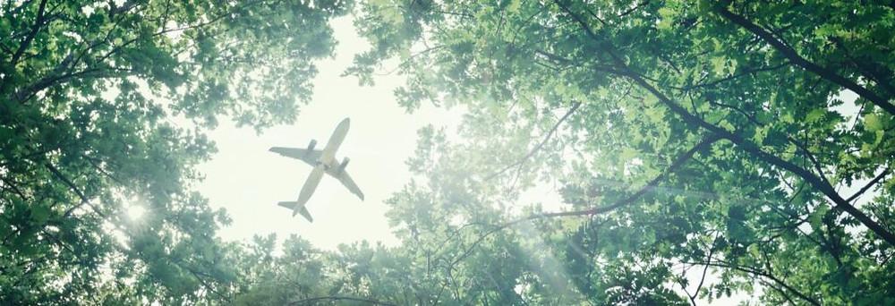 avion en medio de arboles