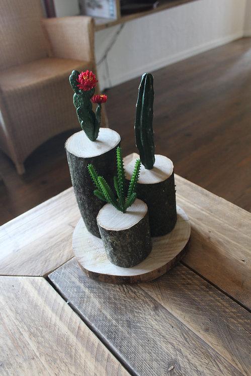 Boomstam met cactussen