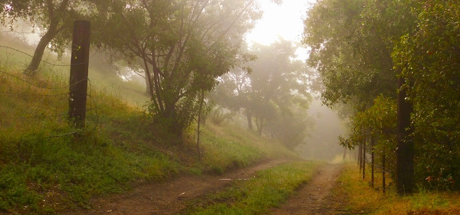 Path through the oaks_edited.jpg
