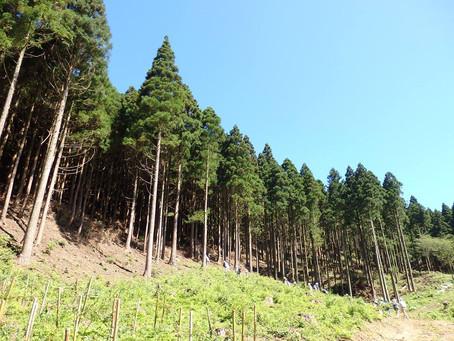 森の再生は、僕たちの再生  藤井芳広