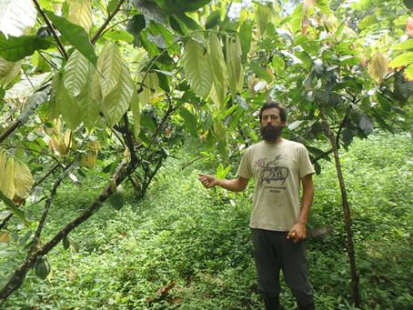 マシュピ農園の森づくり~畑づくりが森をよみがえらせる!