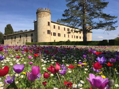 Progettazione culturale: Castello del Calcione in provincia di Arezzo