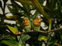 Biosfera_pappagalli
