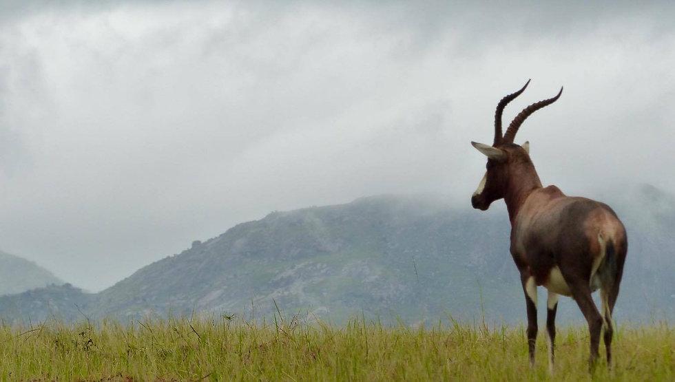 antilope.jpg