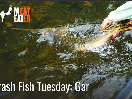 Don't believe the hype, gar are a great species to target on a fly rod, and there are a few things about them that may suprise you. Check out my story for MeatEater in the link below.