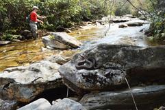 Pic (Appalachia Snake).png