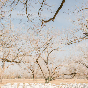 The Orchard at Caney Creek.jpg