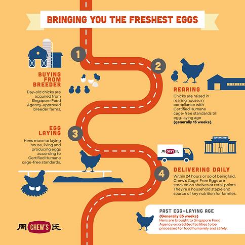 Bringing You The Freshest Eggs