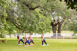 Yoga under the Oak Trees