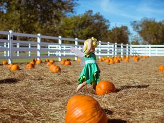 Stella Plantation's Pumpkin Patch