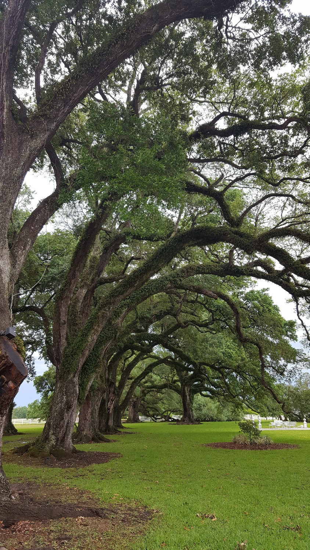 Oak Row at Stella Plantation