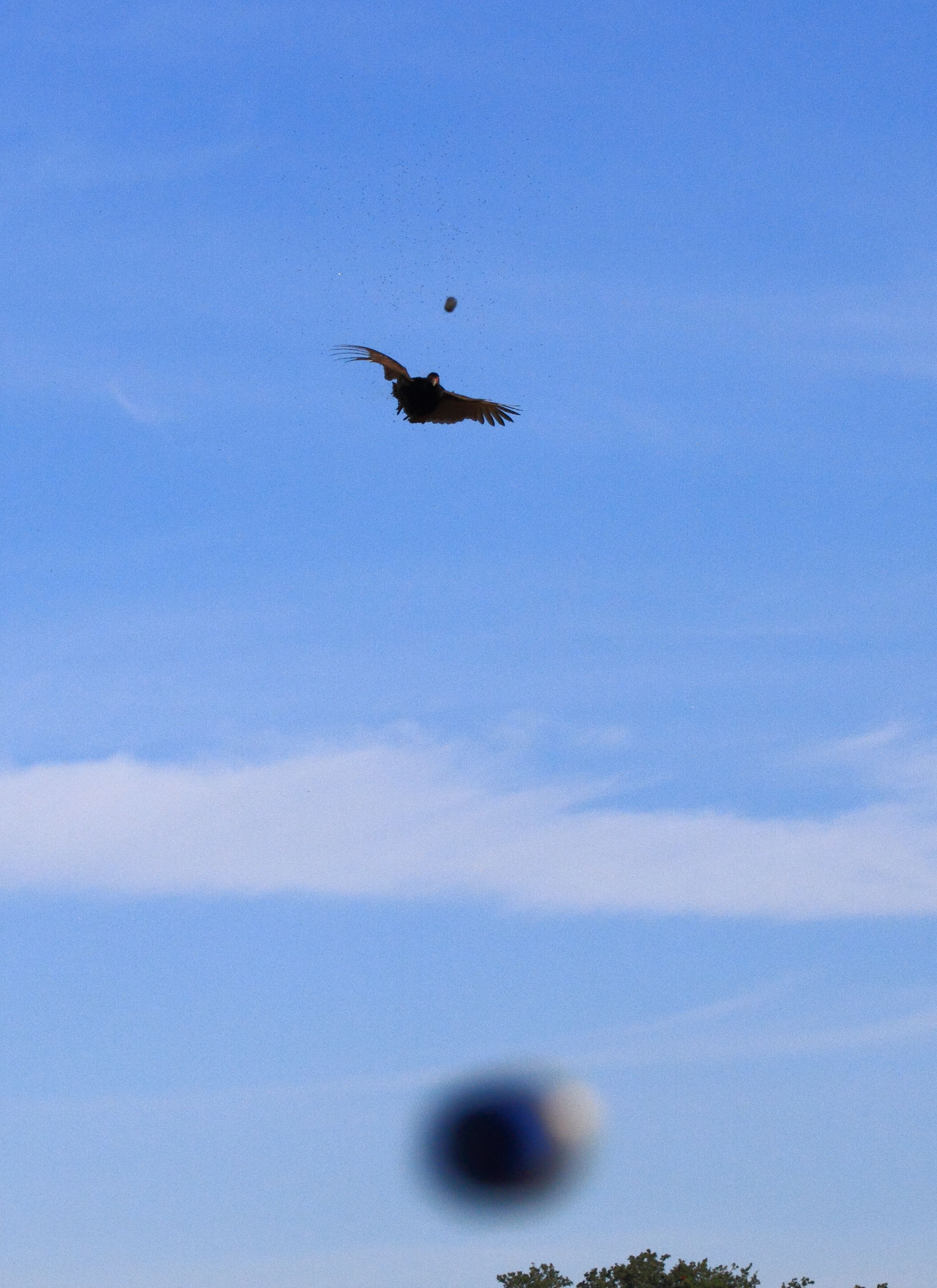 Pheasant Shoot
