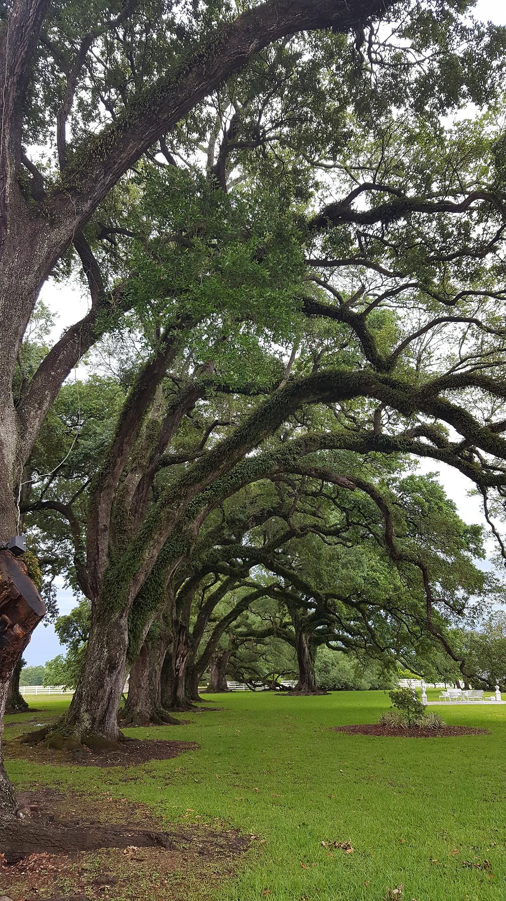 The beautiful grounds of Stella Plantation