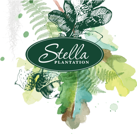 Stella Plantation, New Orleans Event and Wedding Venue
