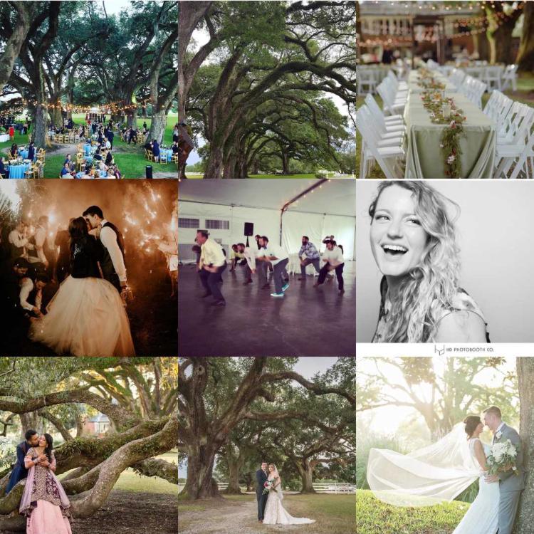 Stella Plantation's Instagram Top 9