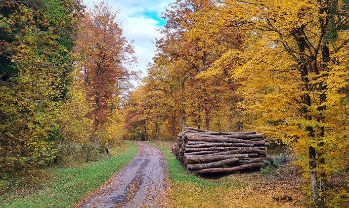 L'automne sur le réseau Colver