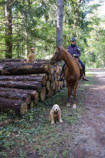 Une cavalière, son cheval et son chien fidèle