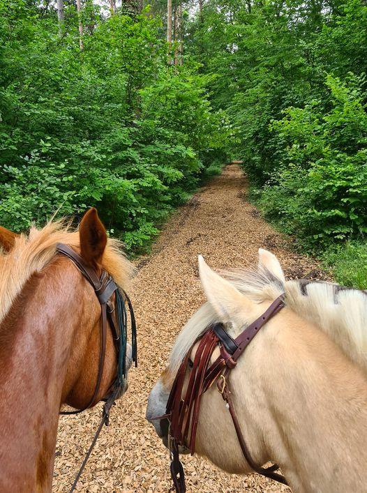 Les chevaux contents de retrouver de belles pistes!!!