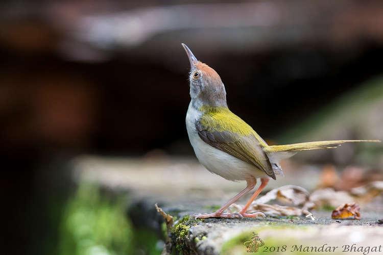 tailorbird MMB_0346.jpg