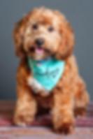 teddy-1_orig.jpg