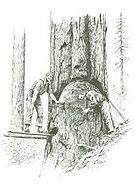 120 timber fallers.JPG
