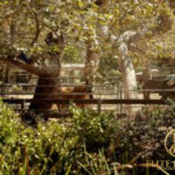 Malibu-Equestrian-Tennis-20-150x150
