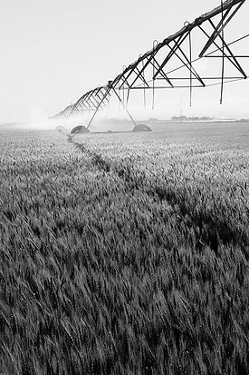 Irrigation%20BW_edited.jpg
